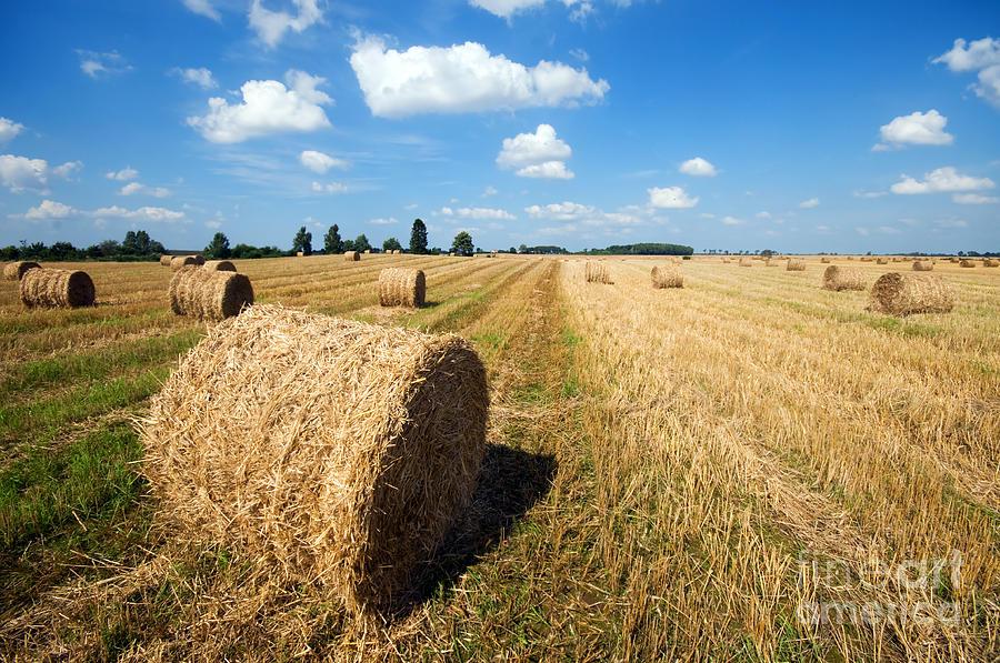 Harvest Photograph - Haystacks In The Field by Michal Bednarek
