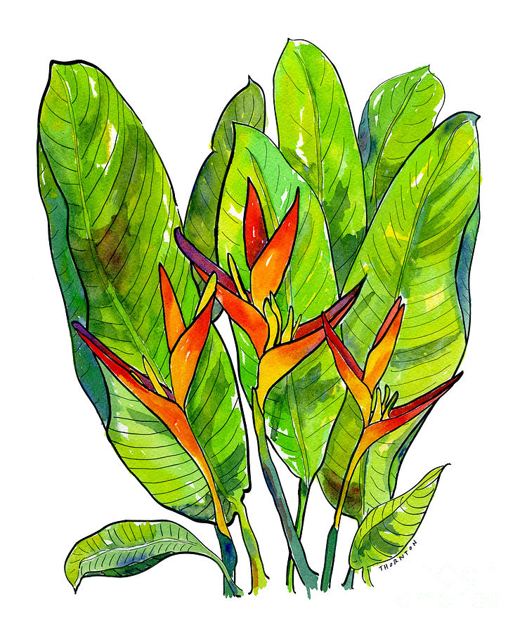 Heliconia by Diane Thornton