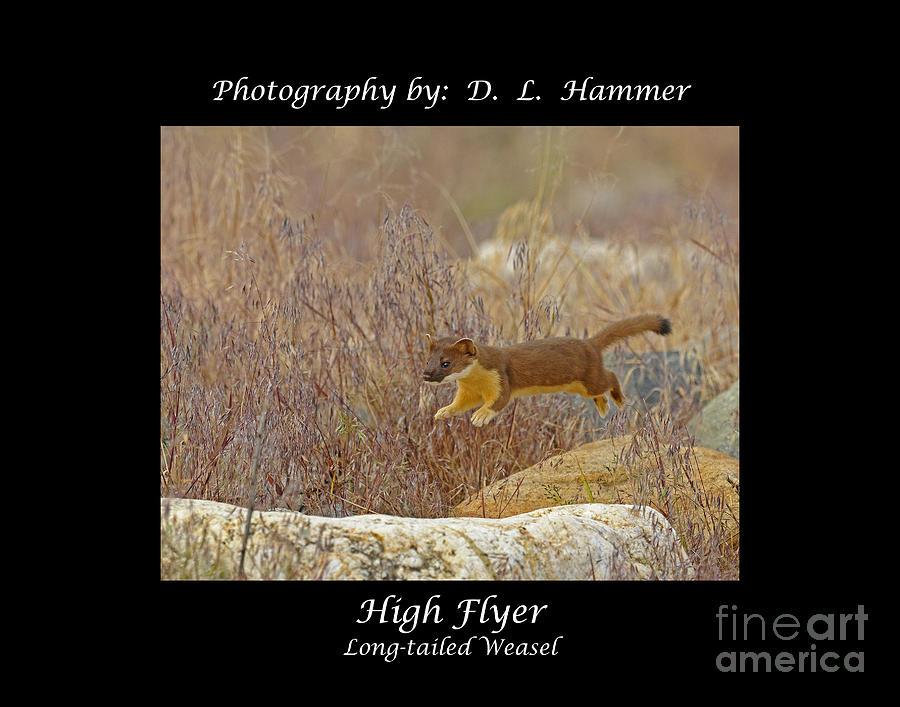 Wildlife Photograph - High Flyer by Dennis Hammer