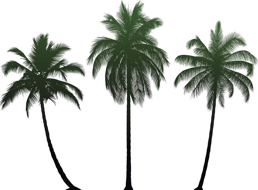 Highly Detailed Palm Trees Drawing by Leontura