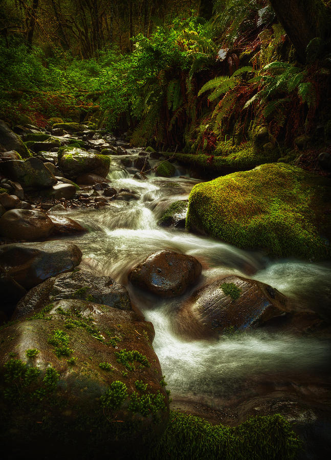 Water Photograph - Hoh Stream by Stuart Deacon