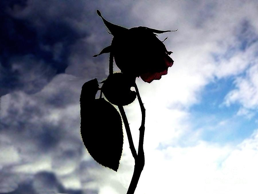 Rose Photograph - Holding Out Hope by Scott Allison
