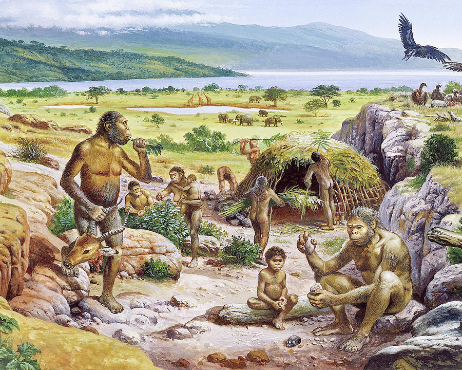 Paranthropus Boisei Photograph - Hominid Settlement 1 by Christian Jegou Publiphoto Diffusion/ Science Photo Library