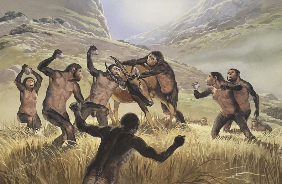 Homo Habilis Hunting Artwork Photograph By Science Photo
