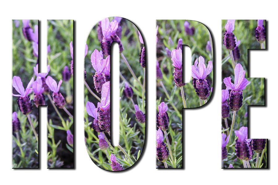 Hope in Spanish Lavender on White from the Faith Hope and Love Series by Karen Stephenson