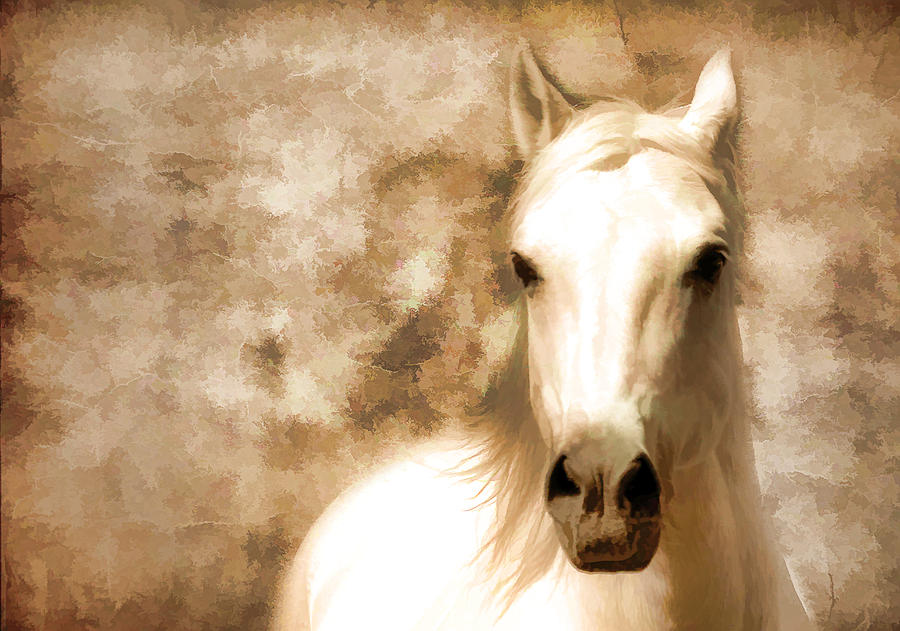 Horses Photograph - Horse Whisper by Athena Mckinzie
