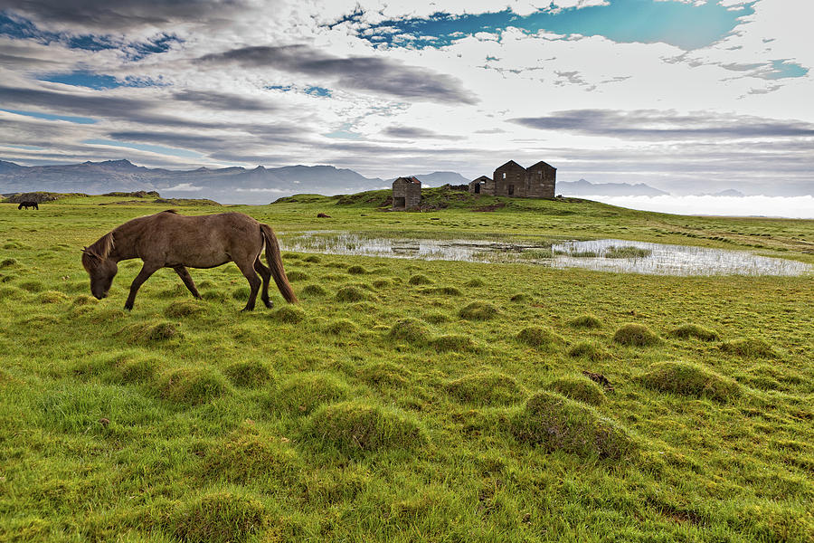 Horizontal Photograph - Horses Grazing By Vidbordssel- by Animal Images