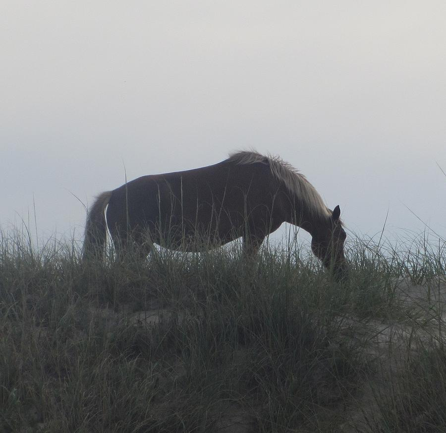 Horse Photograph - Horses Of Corolla 5 by Cathy Lindsey