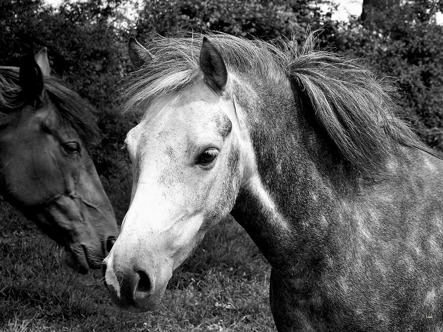 Black And White Photograph - Horses by Thomas Leon