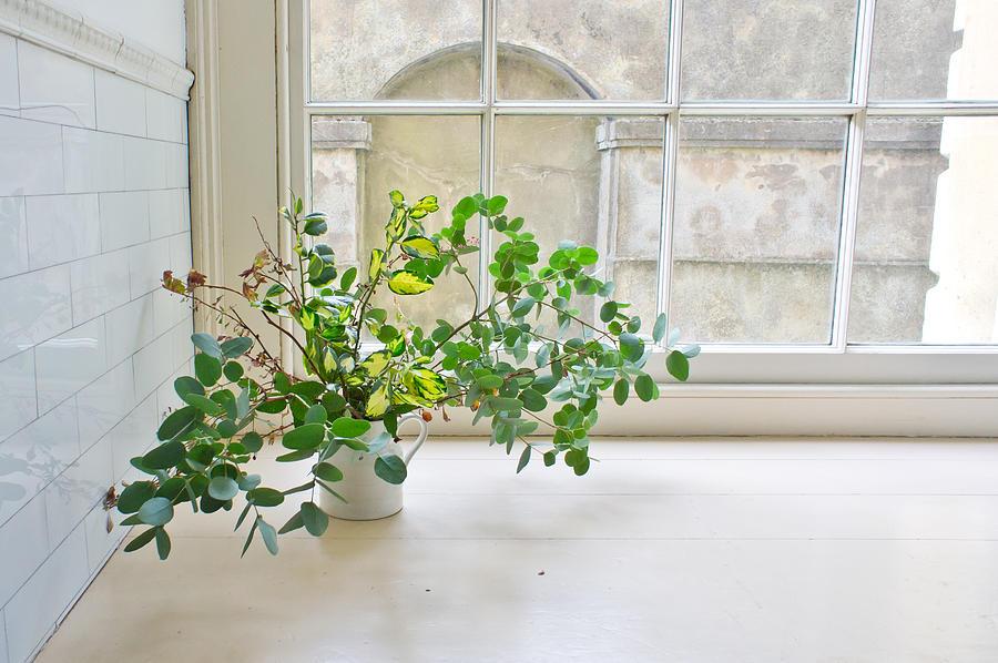 Antique Photograph - House Plant by Tom Gowanlock