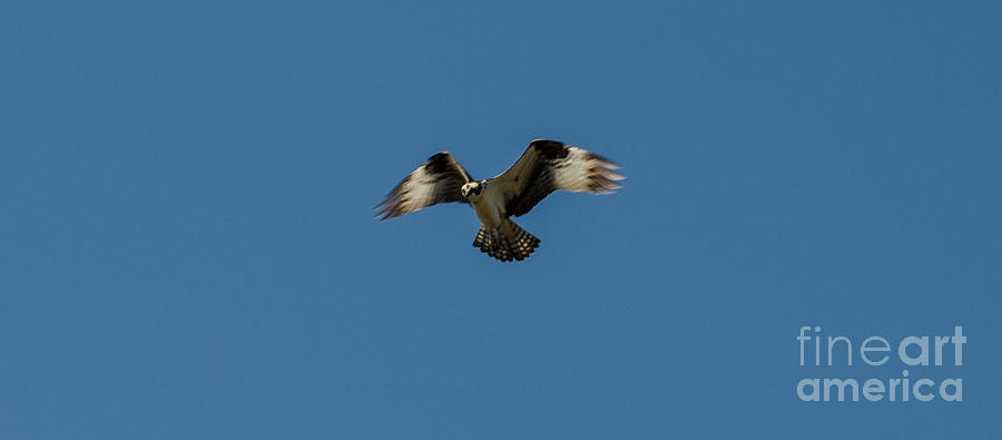 Bird Photograph - Hovering by Donna Brown