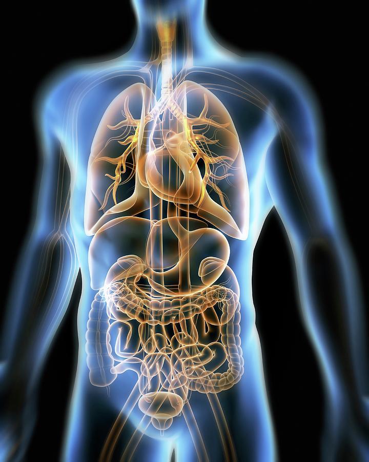 Artwork Photograph - Human Anatomy by Pasieka