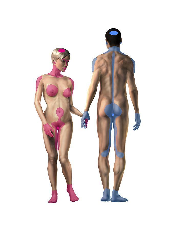 Erotic zone for man