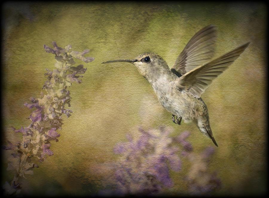Hummingbird Photograph - Hummingbird  by Saija  Lehtonen
