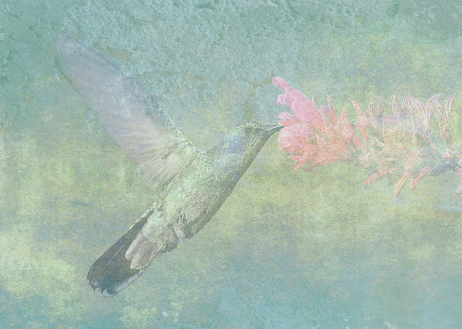 Hummingbird Digital Art - Hummingbird Tune by Sarah Vernon