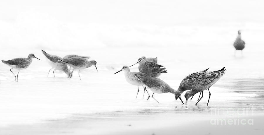 Birds Photograph - Hungry Birds by Patty Descalzi