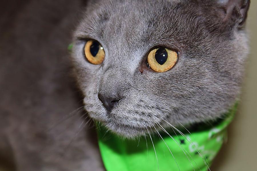 Cat Photograph - I Love You by Joyce Baldassarre