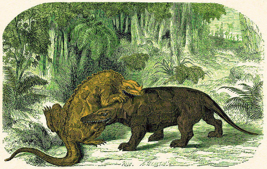 Historic Photograph - Iguanodon Biting Megalosaurus by Wellcome Images