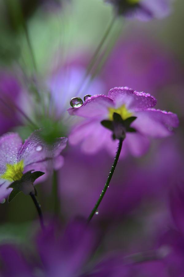 Pink Photograph - In Pink Surroundings by Heidi Westum
