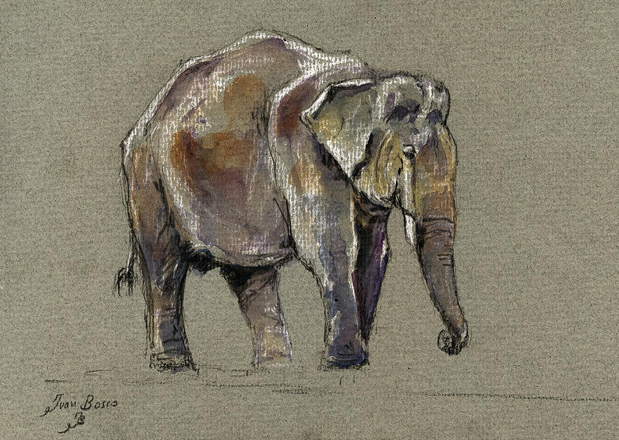 Indian Painting - Indian elephant by Juan  Bosco