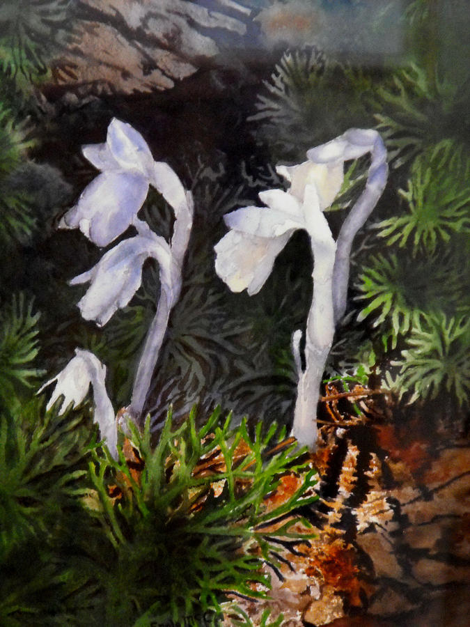 Nature Painting - Indian Pipes by Enola McClincey