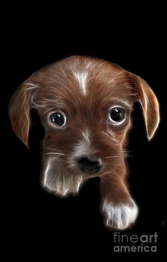Puppy Digital Art - Innocent Loving Eyes by Peter Piatt