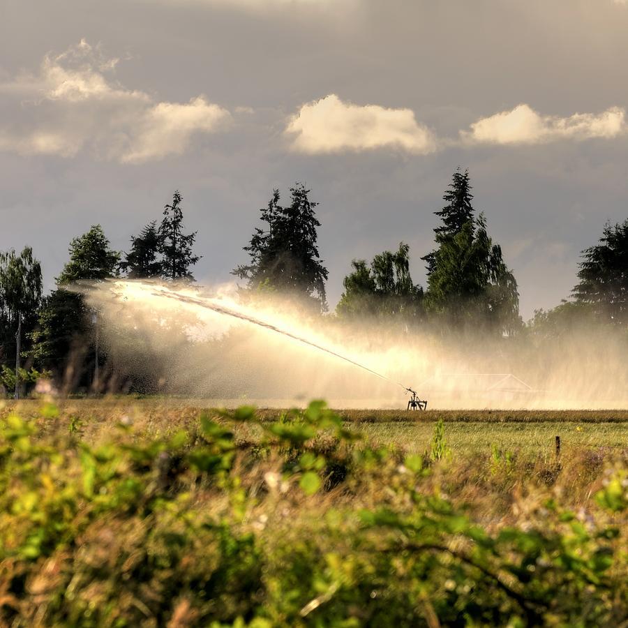 Irrigation Sprinkler 25161 Photograph