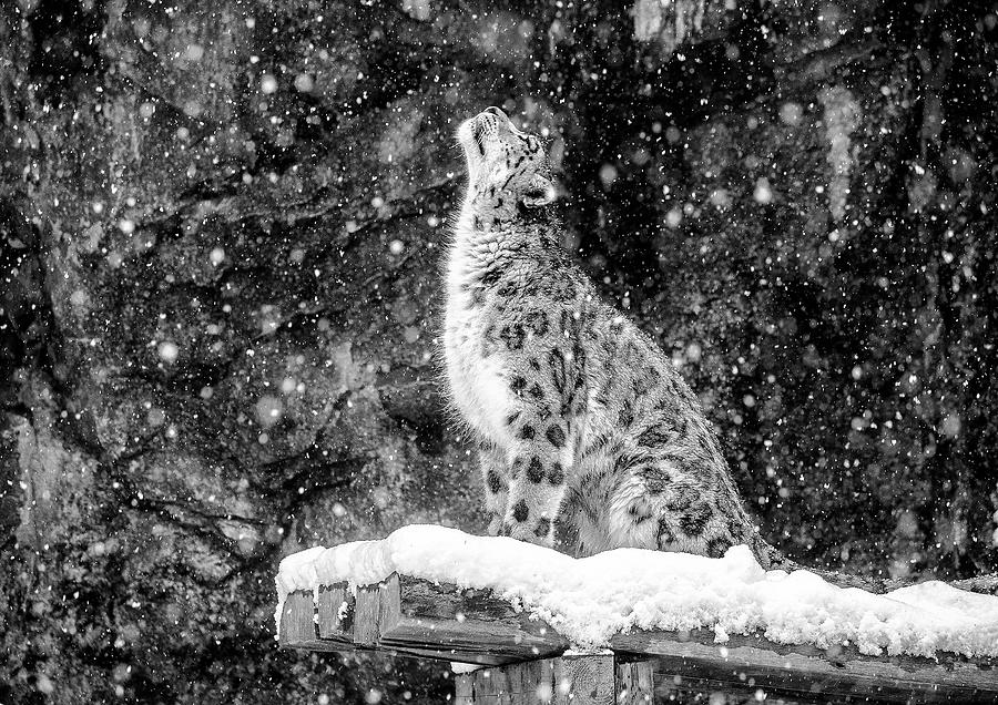 Snow Photograph - Its Snowing by David Williams