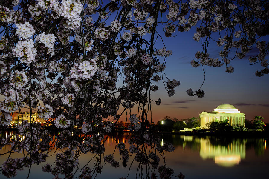 Jefferson Memorial Framed By Cherry Photograph by Ogphoto
