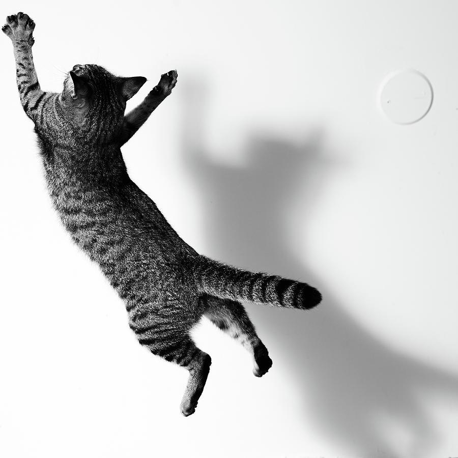 Jumping Cat Photograph by Akimasa Harada
