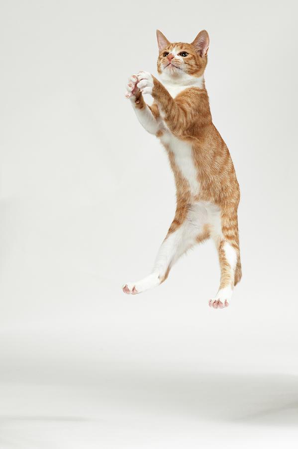 Jumping Kitten Photograph by Akimasa Harada