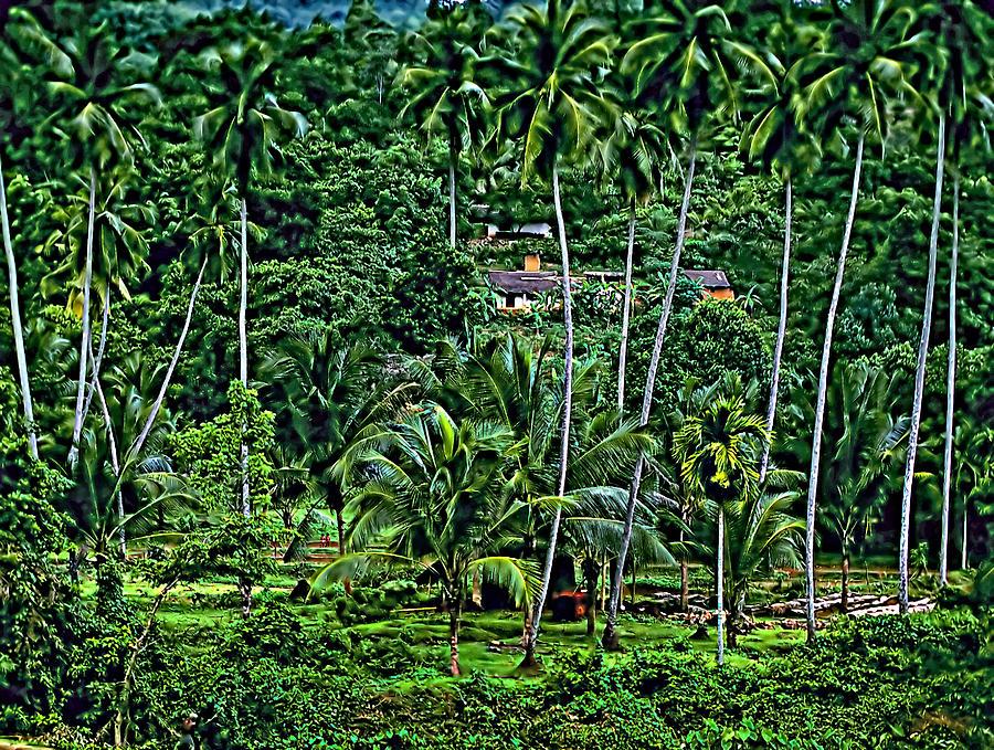 Sri Lanka Photograph - Jungle Life by Steve Harrington