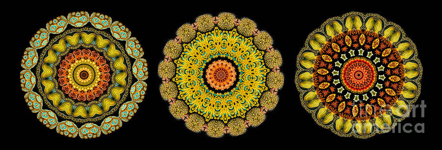 Ernst Haeckel Photograph - Kaleidoscope Ernst Haeckl Sea Life Series Triptych by Amy Cicconi