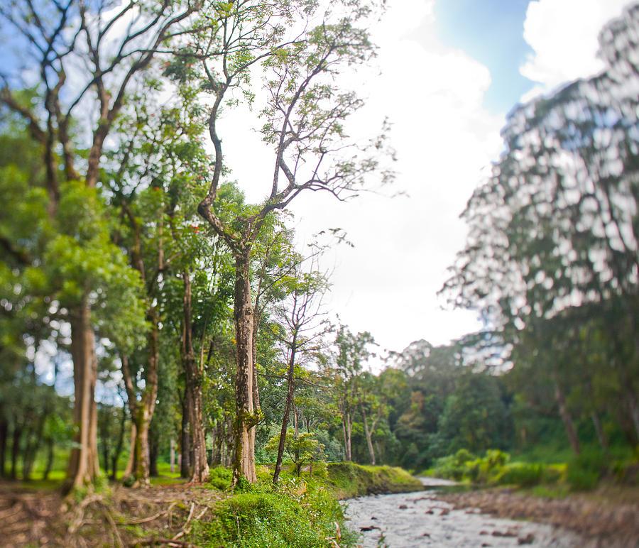 Kauai Photograph by Lannie Boesiger