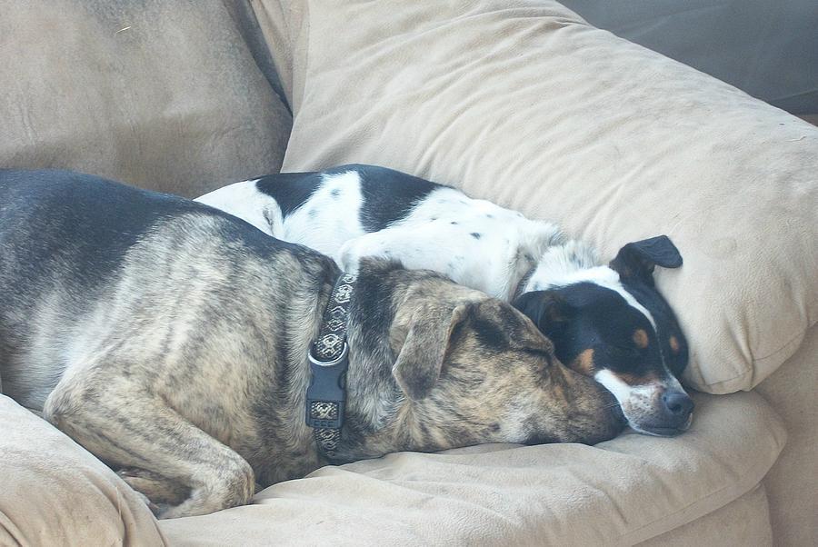 Dogs Digital Art - Keeping Warm by Wide Awake Arts