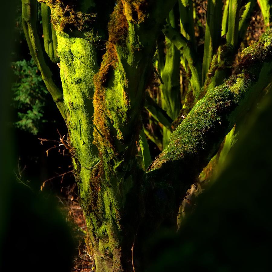Kreder Road Tree Moss 2 20981 Photograph