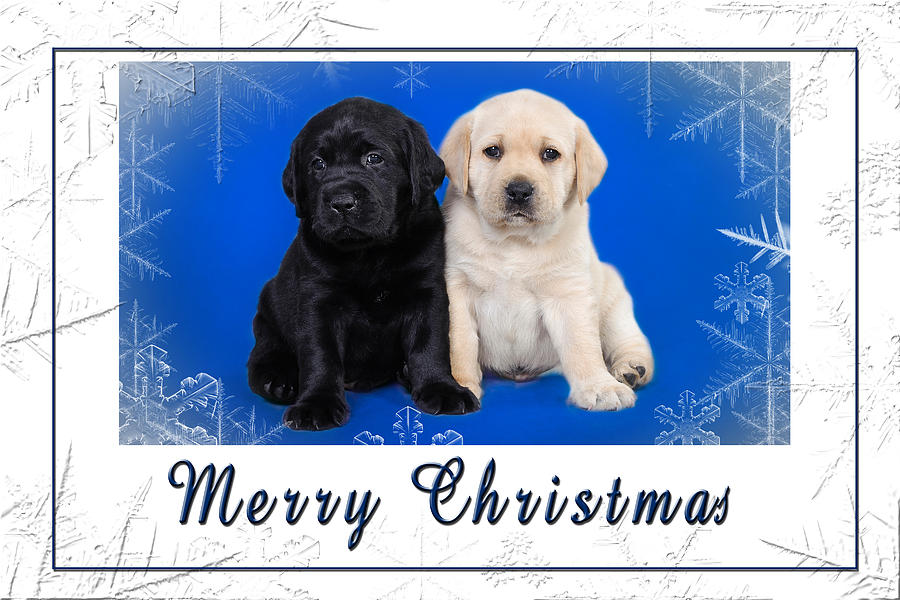 Labrador Retriever Puppies Christmas Card Photograph by Waldek Dabrowski