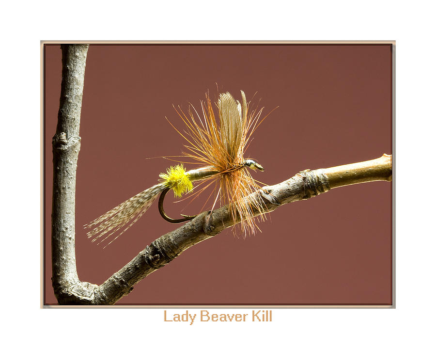 Outdoors Photograph - Lady Beaver Kill by Neal Blizzard
