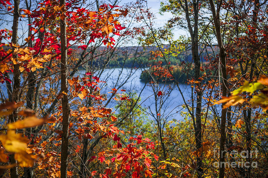 Forest Photograph - Lake And Fall Forest by Elena Elisseeva