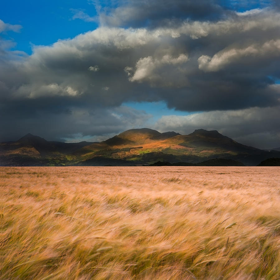 Landscape Photograph - Landscape Of Windy Wheat Field In Front Of Mountain Range With D by Matthew Gibson