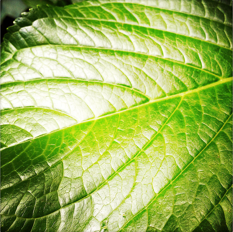 Abstract Photograph - Leaf by Les Cunliffe
