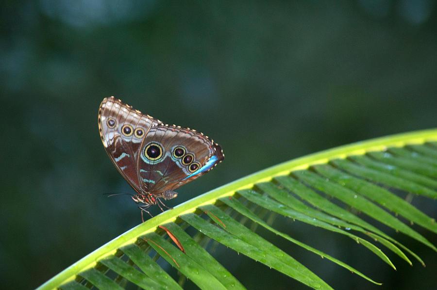 Leaf Sitter Photograph