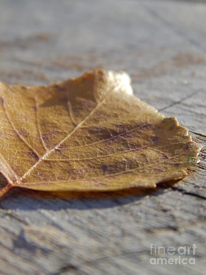 Alaska Photograph - Leaves by Jennifer Kimberly