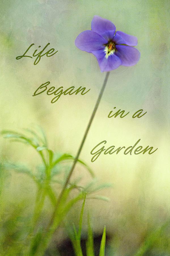 Life Began in a Garden by Patricia Montgomery
