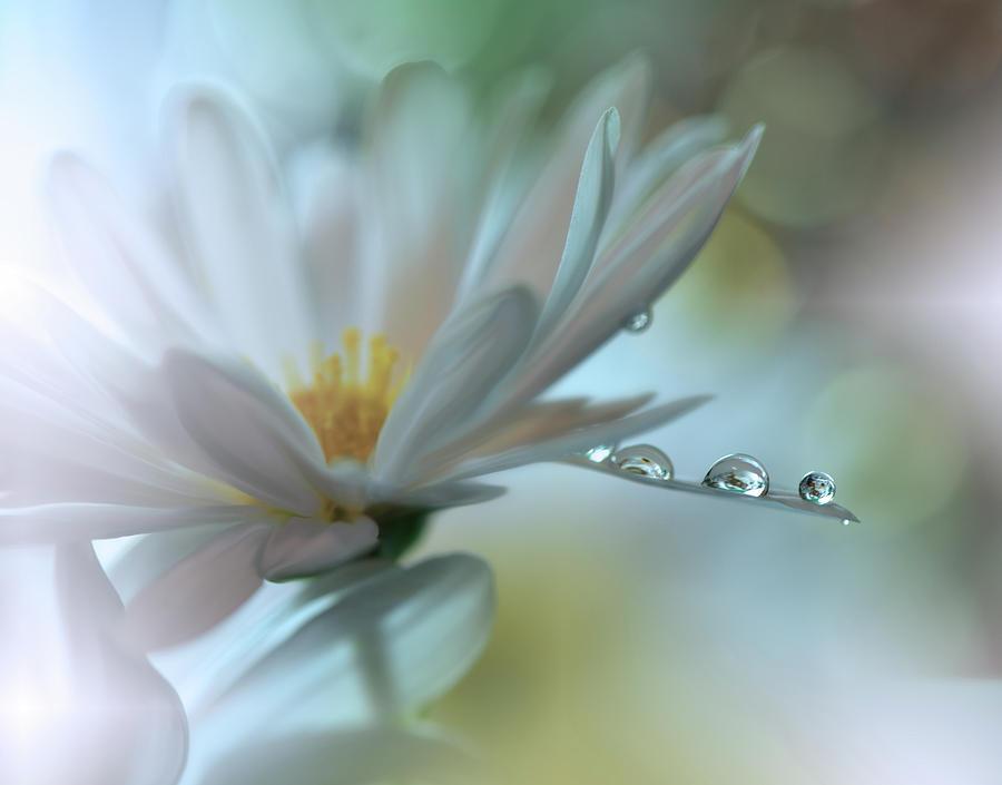 Macro Photograph - Light Touch... by Juliana Nan