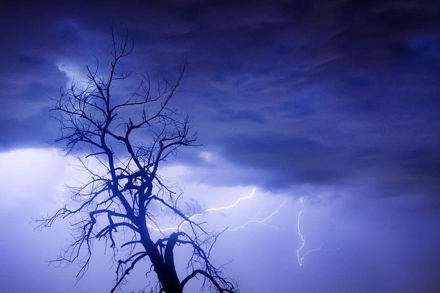 Lightning Tree Silhouette 29 Photograph