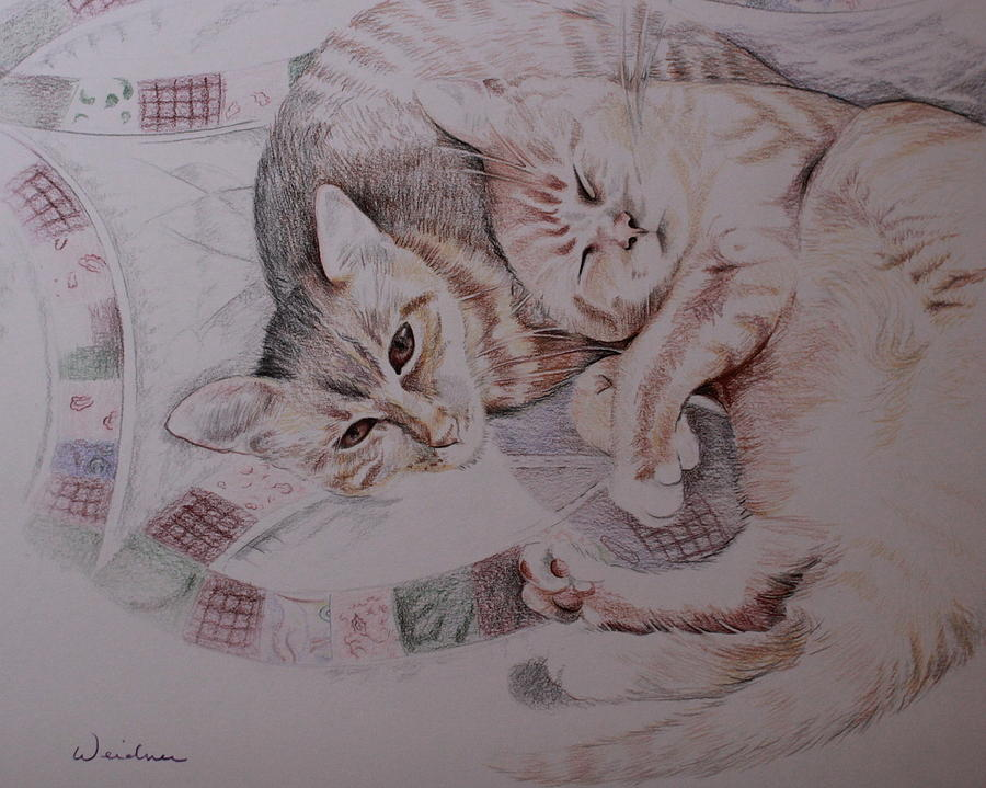 Cats Drawing - Lilly And Maddie by Kathy Weidner