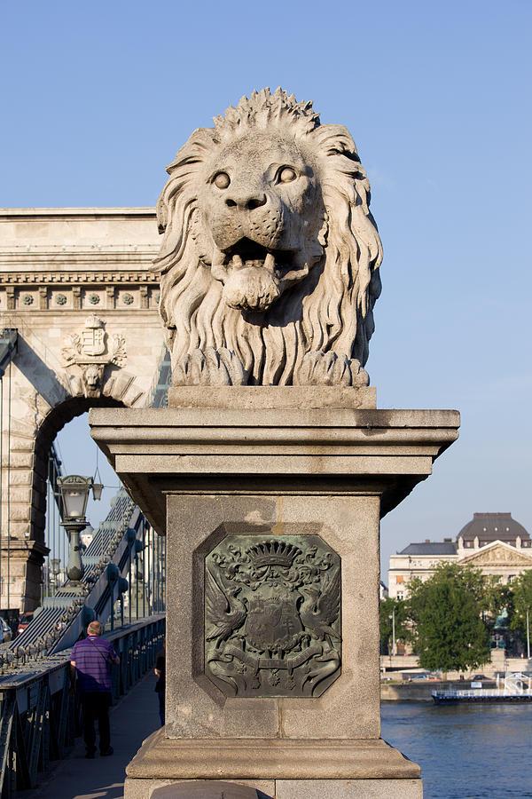 Lion Photograph - Lion Sculpture On Chain Bridge In Budapest by Artur Bogacki