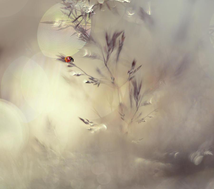 Macro Photograph - Little Lady by Heidi Westum