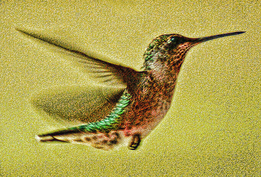 Little Wings Photograph by Joe Bledsoe
